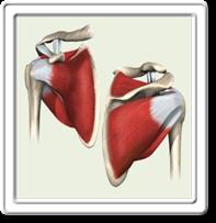 rotator-cuff-tendinitis